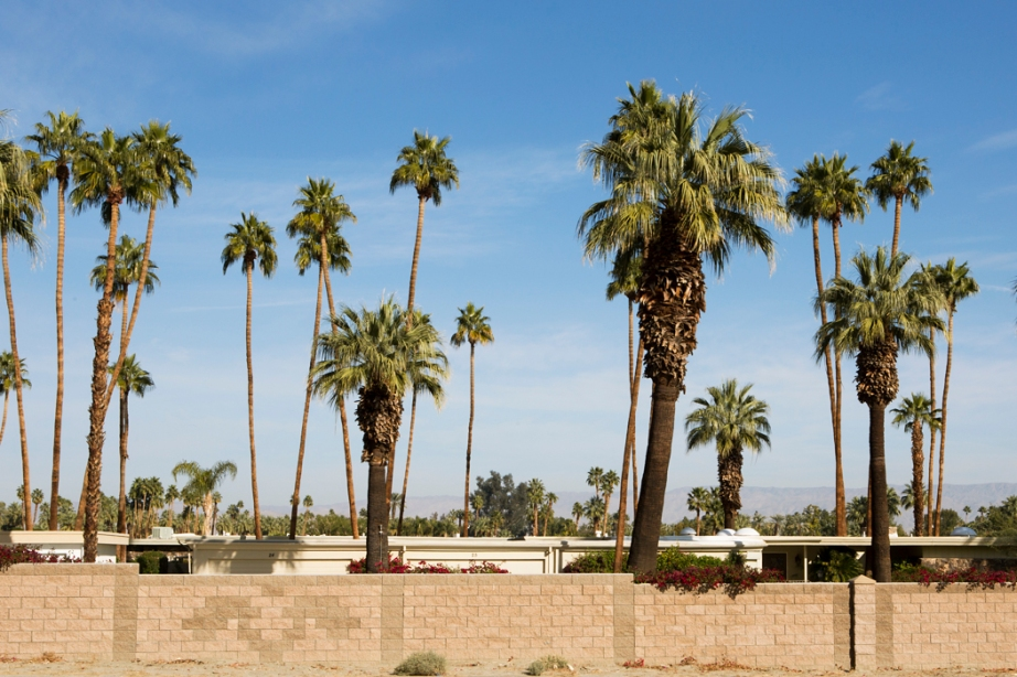 Palm Grove 2012