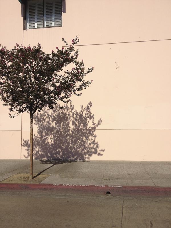 DK_chinatown.tree