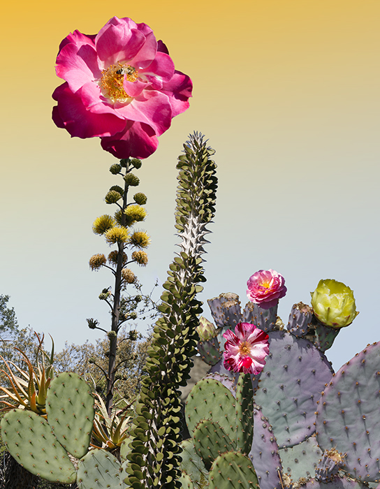 Desert Sorbet