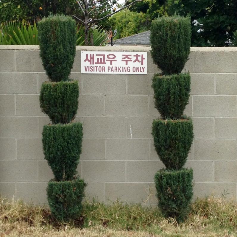 15.10_DK_shrub-2