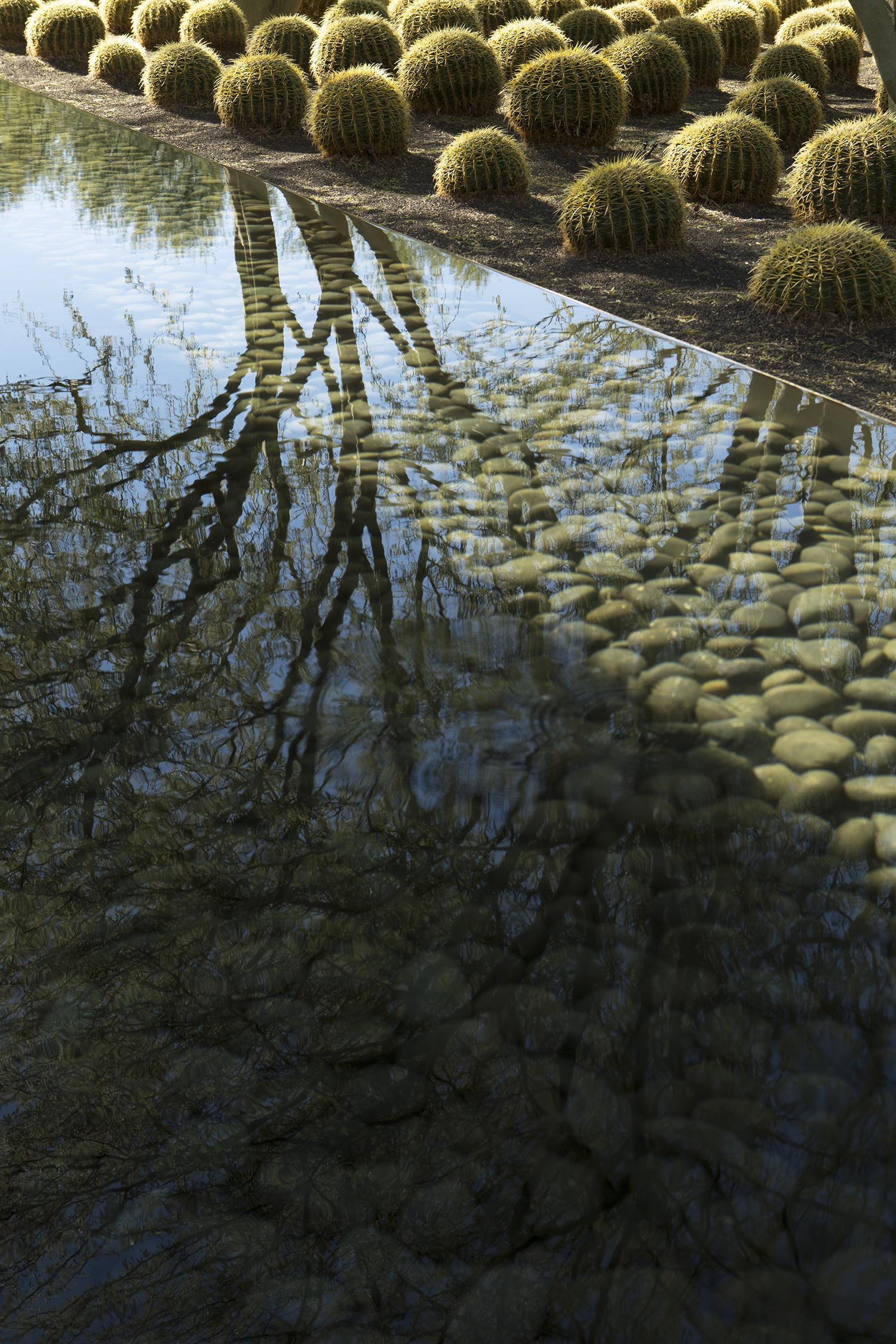cactus-pond