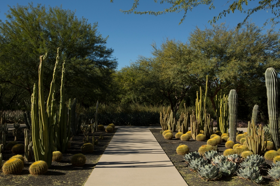 sunny-cactus-horizontal